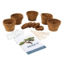Bonsai Trees Grow it - Bonsai Zucht Kit